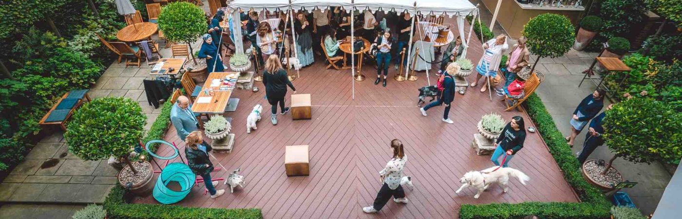 LONDON'S POSHEST POOCHES RETURN FOR THE HOME HOUSE DOG SHOW Hero Image